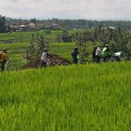 Cycling group tour to jatiluwih rice terrace